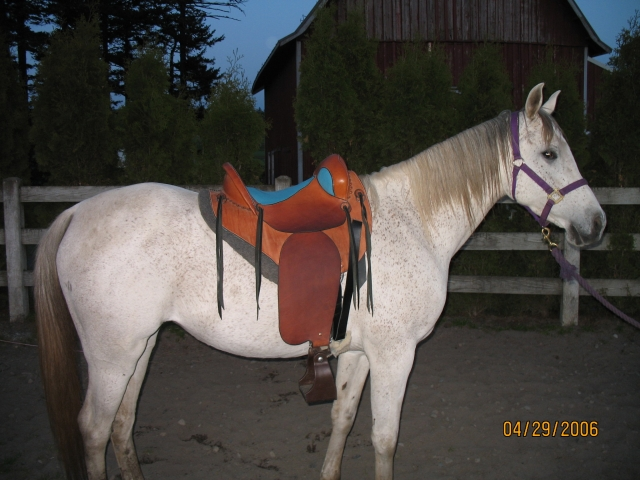 Trail saddle on Arab mare